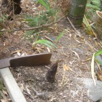 タケノコ掘り1