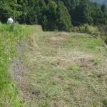 そば畑の下草刈り4