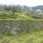 そば畑の上は高い石積みの棚田が広がっています